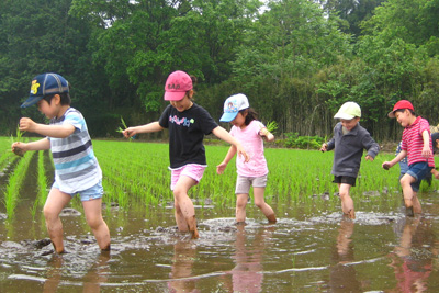 Rice Planting at Tsukuba International School